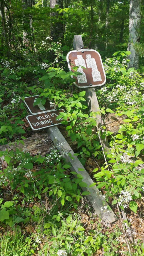 Trail Signs for Three Forks of Beaver Overlook