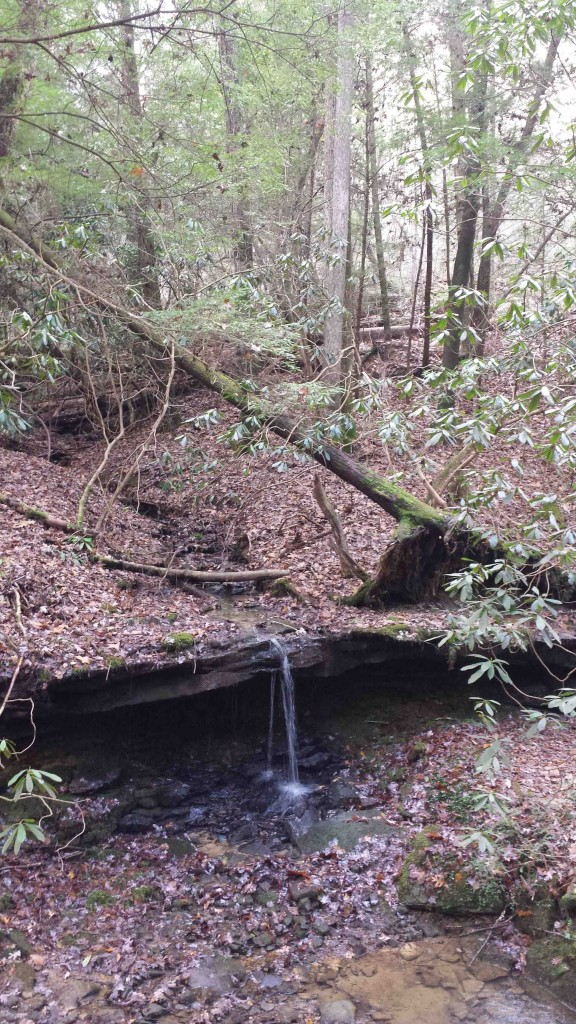 Tiny Fall Sheltowee toward Vanhook 11-24-14