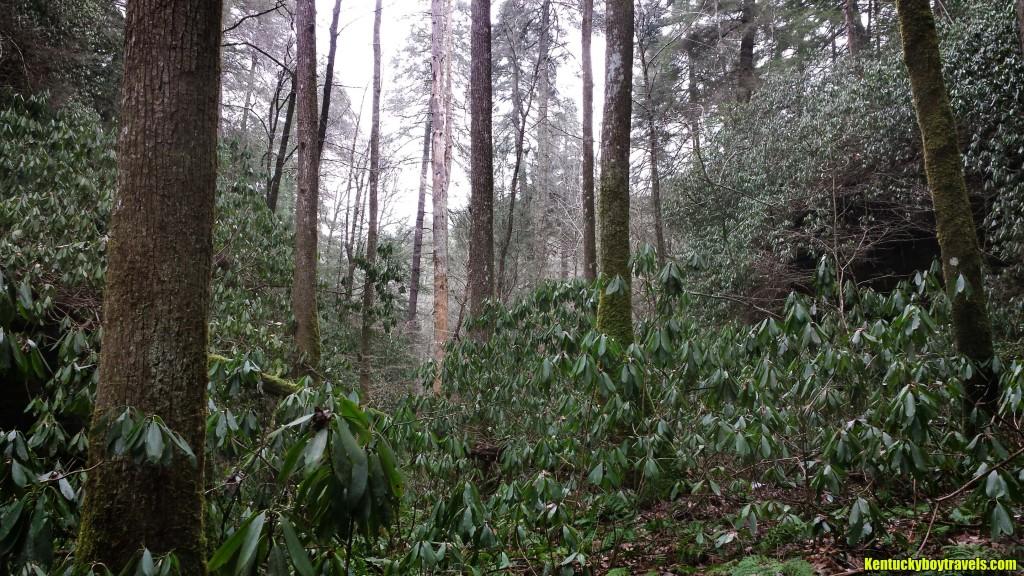 Rock Creek Gorge 1-10-16