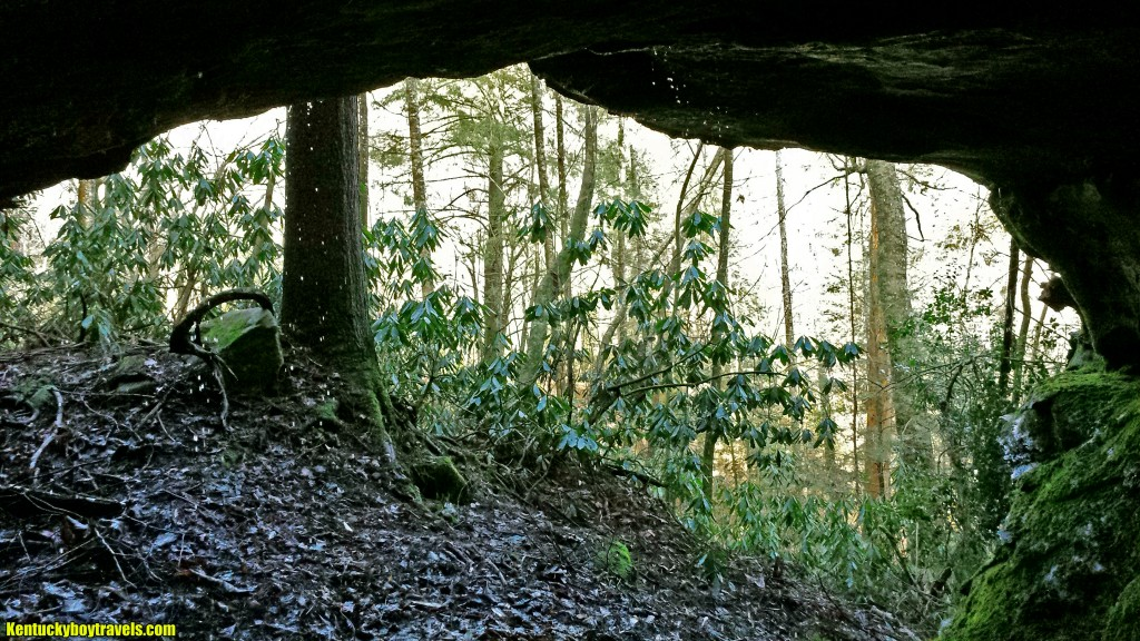 From beneath the rock shelter