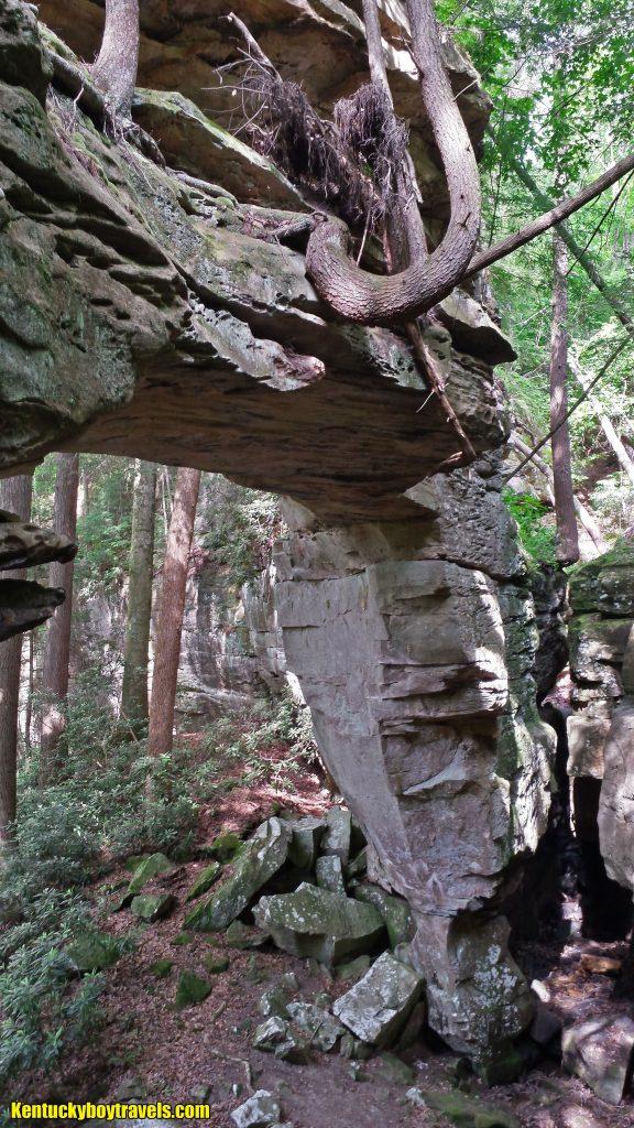 Split Bow Arch 5/25/15