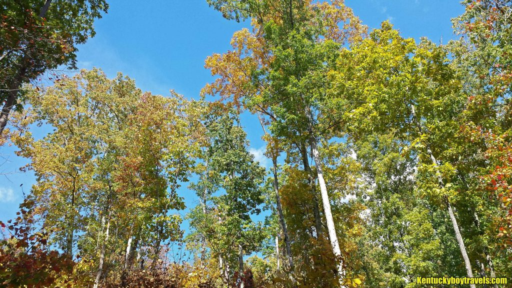 tree-tops-of-lewis-hollow-trail-10-15-16