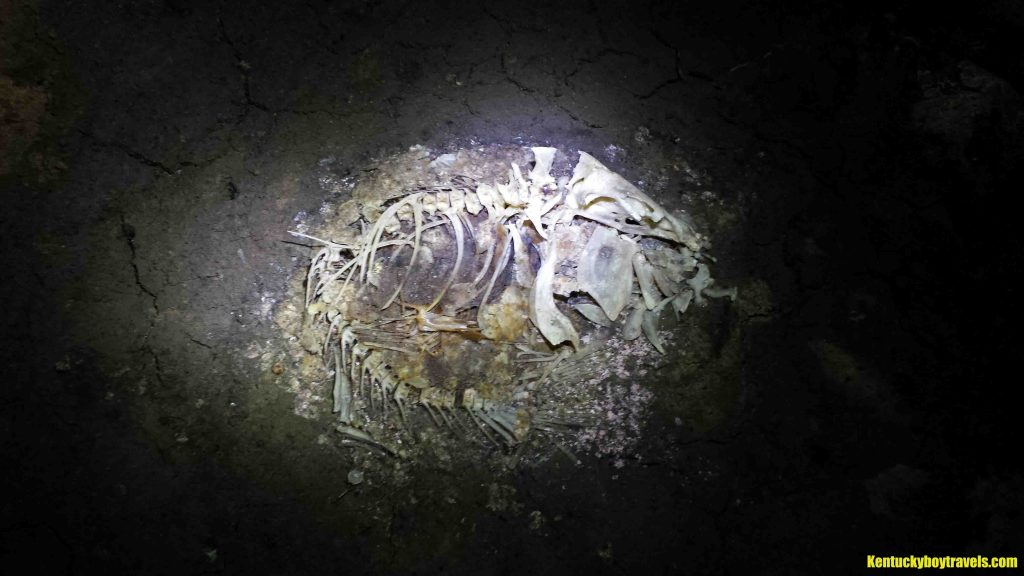 deceased-aquatic-creature-inside-drowned-rat-cave-11-12-16