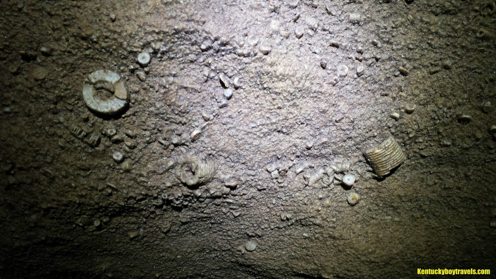 more-ossicles-inside-farmers-overlook-cave-11-27-16